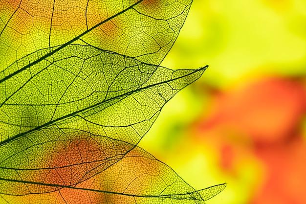 Levendige abstracte herfstbladeren Premium Foto