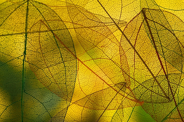 Levendige groene herfstbladeren Gratis Foto