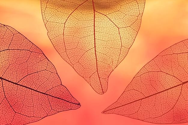 Levendige transparante oranje herfstbladeren Gratis Foto