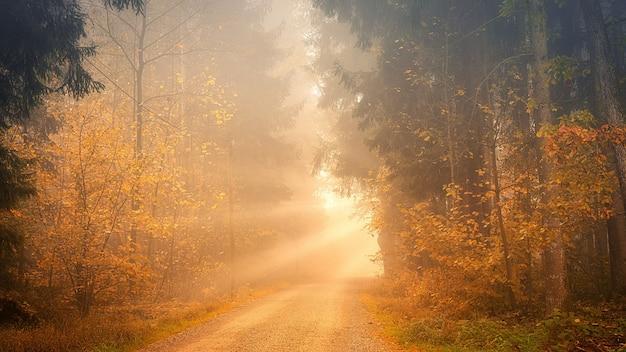Licht door weg tussen bomen Gratis Foto