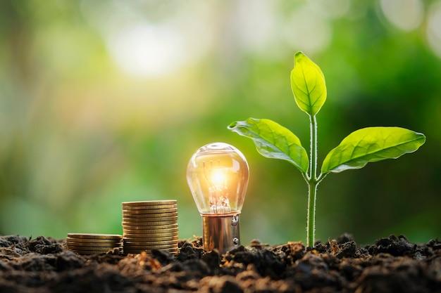 Lightbulbgeldstapel en jonge plant in aard. idee energiebesparing en boekhoudfinanciën concept Premium Foto