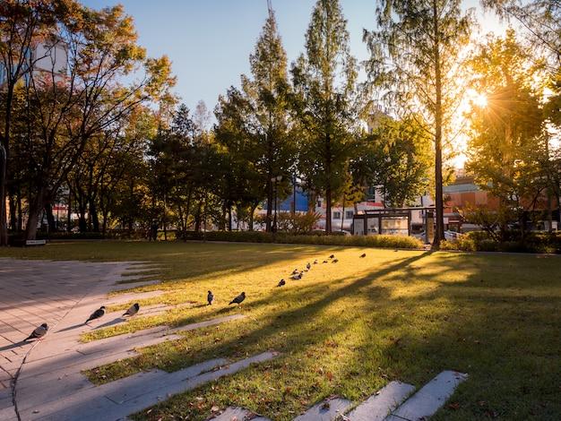 Lijn van duiven in park Premium Foto