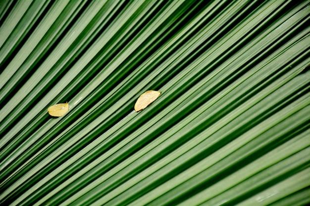 Lijnen en texturen van groene palmbladeren Premium Foto