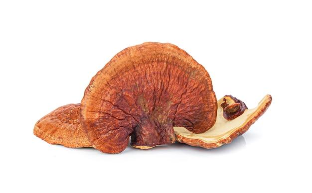 Lingzhi mushroom ganoderma lucidum geïsoleerd Premium Foto