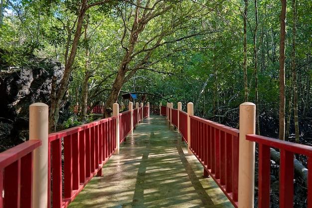 Loop door het mangrovebos in azië. Premium Foto