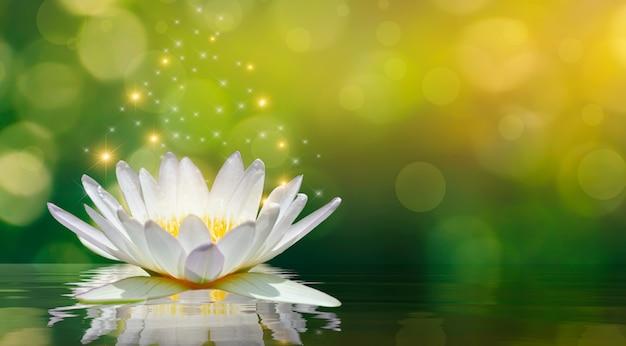 Lotuswit lichtpaars drijvend licht schittert Premium Foto