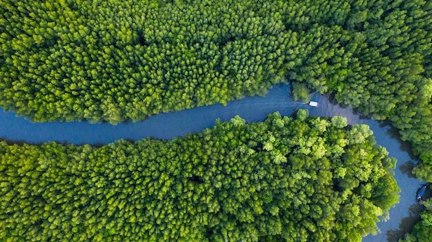 Lucht hoogste mening van boot op de rivier in mangrove forest conservation in thailand Premium Foto