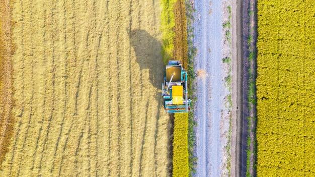 Lucht hoogste mening van maaimachinemachine die hierboven in padieveld werken van Premium Foto