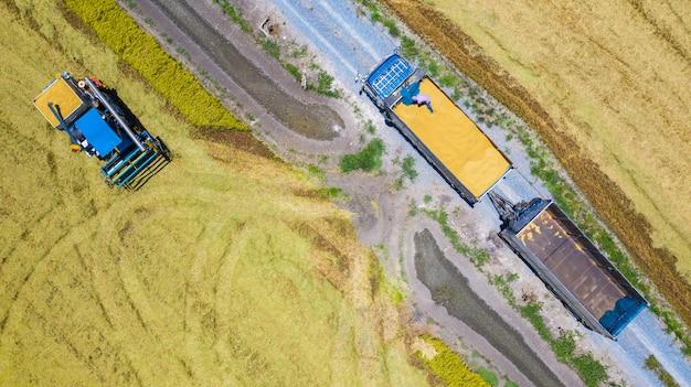 Lucht hoogste mening van maaimachinemachine en vrachtwagen die in padieveld, mening hierboven werken van Premium Foto