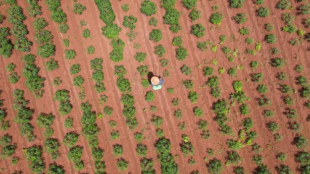 Luchtfoto bovenaanzicht van boeren werken op boerderijen cassave Premium Foto