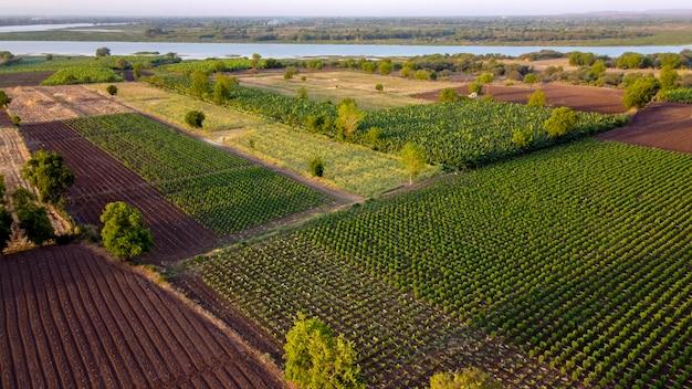 Luchtfoto bovenaanzicht van landbouw veld Premium Foto
