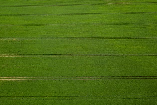 Luchtfoto groene soja veld. Premium Foto