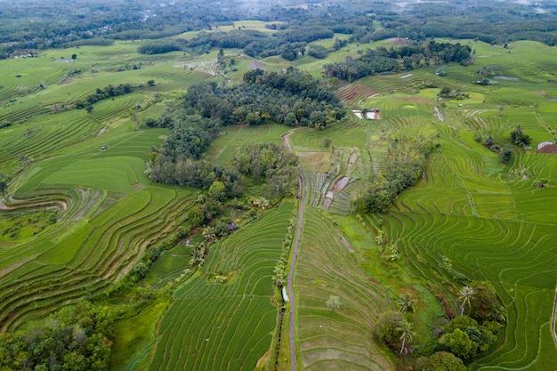 Luchtfoto landschap rijstvelden in indonesië met verbazingwekkende patroon van velden in de lucht Premium Foto