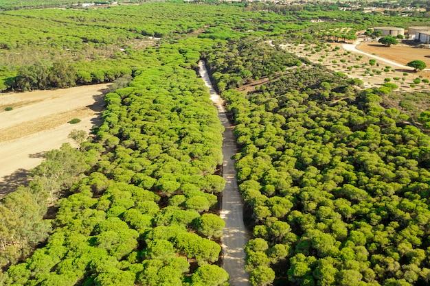 Luchtfoto panoramisch landschapsmening van een weg in het bos Gratis Foto