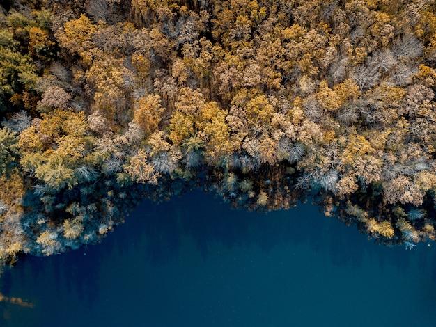 Luchtfoto van bruin doorbladerde bomen in de buurt van een water Gratis Foto