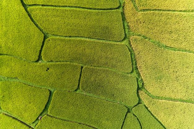 Luchtfoto van de drone top down van groene en gouden rijstvelden met prachtig licht van de natuur in de ochtend Premium Foto