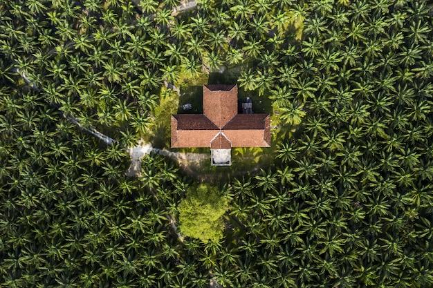 Luchtfoto van een palmbomen op een palmolieplantage in zuidoost-azië Gratis Foto