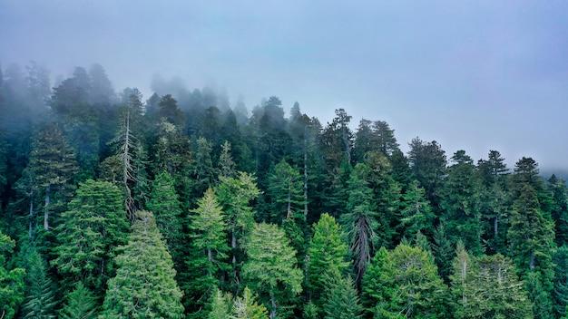 Luchtfoto van een prachtig bos op een heuvel omgeven door natuurlijke mist en nevel Gratis Foto