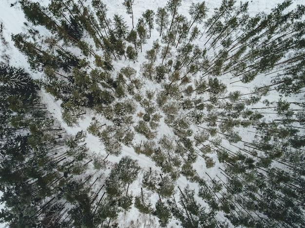 Luchtfoto van een prachtig winterlandschap met sparren bedekt met sneeuw Gratis Foto