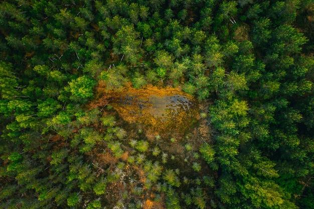 Luchtfoto van een wateroppervlak in het midden van een bos, omringd door hoge groene bomen Gratis Foto