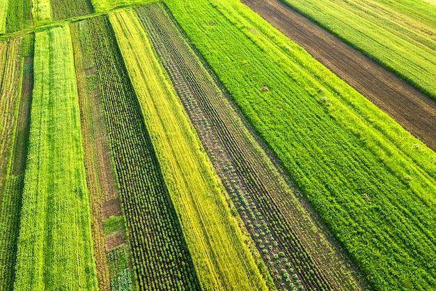 Luchtfoto van groene landbouwgebieden in het voorjaar met verse vegetatie na het zaaien seizoen op een warme zonnige dag. Premium Foto