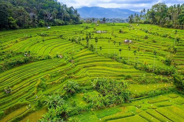 Luchtfoto van terrasvormige rijstvelden bali, indonesië Gratis Foto