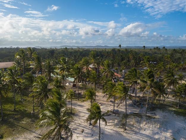Luchtfoto van tropisch landschap met kokospalmen Premium Foto