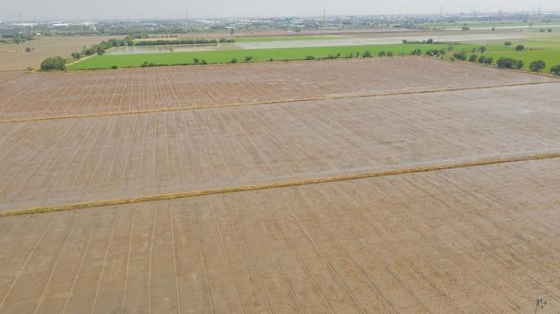 Luchtfoto van vliegende drone van veld rijst met landschap groen patroon natuur scène bovenaanzicht veld rijst Premium Foto