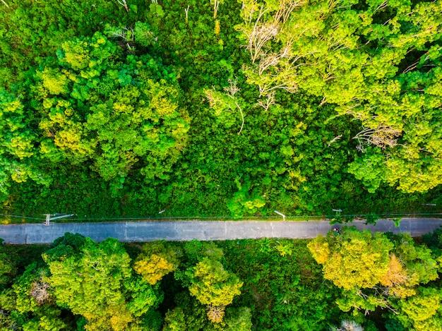 Luchtmening van boom in het bos met weg Gratis Foto