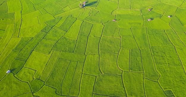 Luchtmening van het groene en gele verschillende patroon van het padieveldlandschap bij ochtend in noordelijk thailand Premium Foto