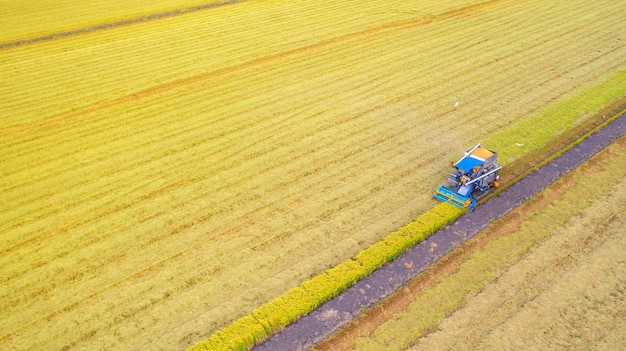 Luchtmening van maaimachinemachine die in padieveld van hierboven werken Premium Foto