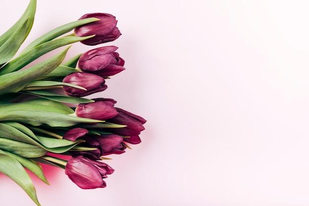 Luchtmening van verse rode tulpenbloemen over roze achtergrond Gratis Foto