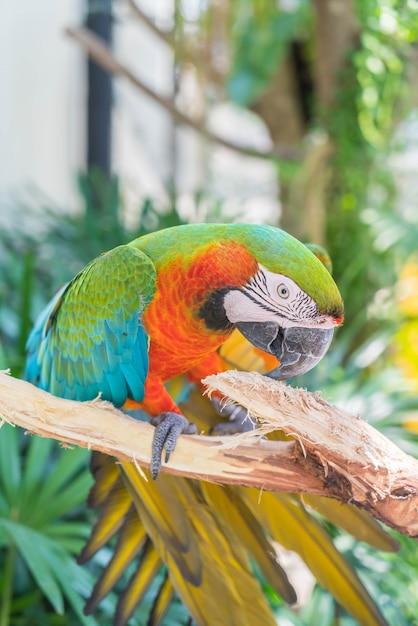 Macau papegaai Gratis Foto