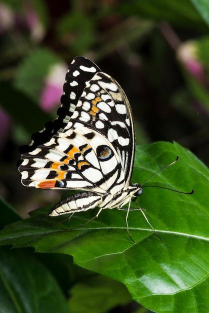 Macro kleurrijke vlinder op blad Gratis Foto