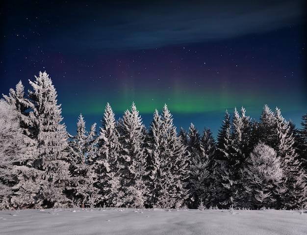 Magische winter besneeuwde boom. winterlandschap. levendige nachtelijke hemel met sterren en nevel en galaxy. diepe lucht astrofoto Premium Foto