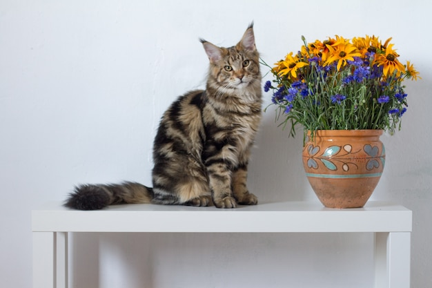 Maine coon-katjeszitting op een witte console naast een vaas met oranje en blauwe bloemen tegen een witte muur Premium Foto