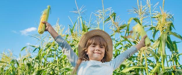 Maïs op het veld in de handen van een kind. selectieve aandacht. Premium Foto