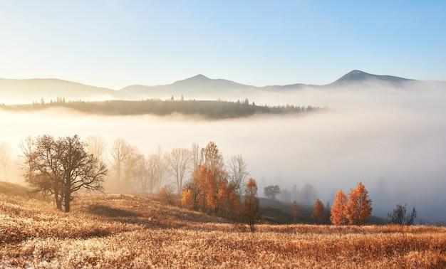 Majestueus landschap met de herfstbomen in mistig bos. karpaten, oekraïne, europa. schoonheid wereld. Gratis Foto