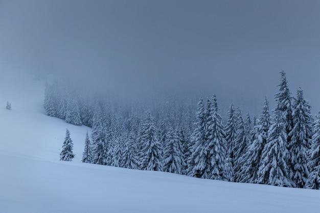 Majestueuze winterlandschap, dennenbos met bomen bedekt met sneeuw. een dramatische scène met lage zwarte wolken, een kalmte voor de storm Gratis Foto