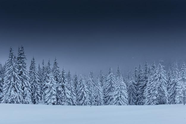 Majestueuze winterlandschap, dennenbos met bomen bedekt met sneeuw. Gratis Foto
