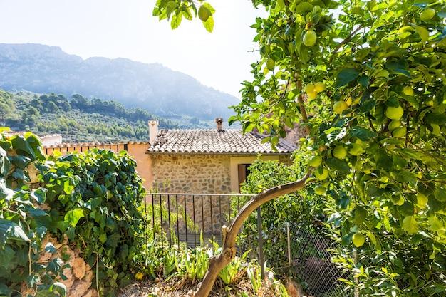Mallorca balearen huis patio in de balearen Premium Foto