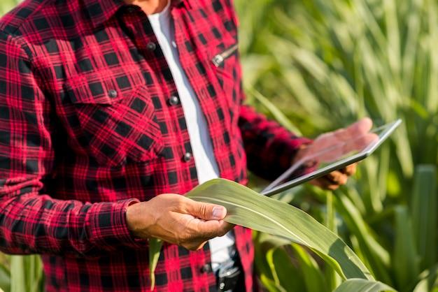 Man met een tablet in een maïsveld Gratis Foto