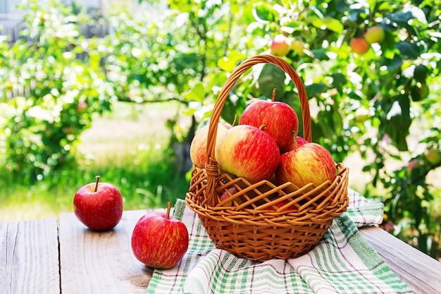Mand met rijpe rode appels op een tafel in een zomertuin Premium Foto