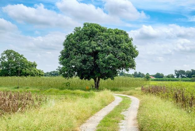 Mangoboom op manierkrommeweide en hemel Premium Foto