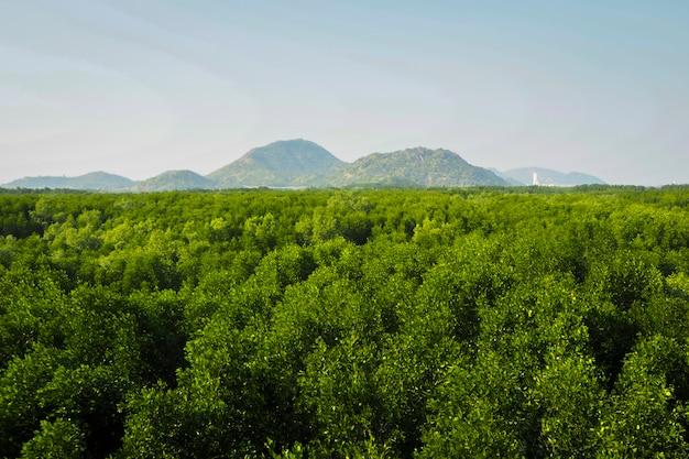 Mangrove tropisch bos in azië Premium Foto