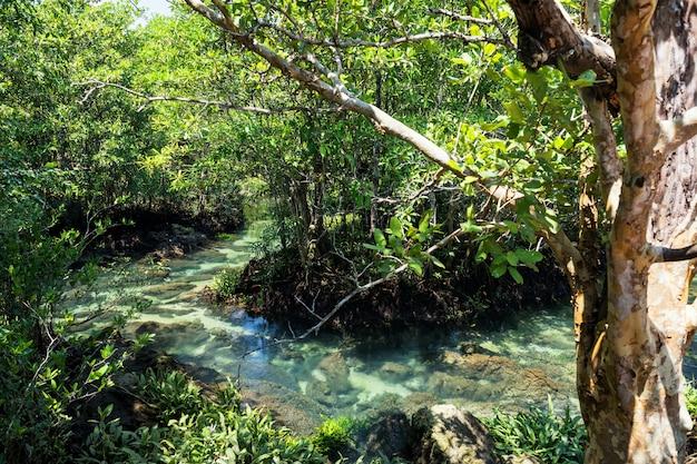 Mangrovebos en moeras in krabi Premium Foto