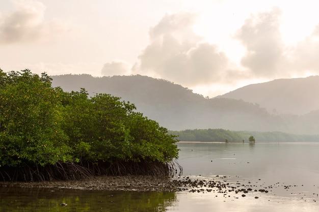 Mangrovegebied bij de monding van de rivier met een achtergrond van bergen en wolken in de ochtend. Premium Foto
