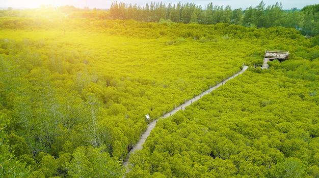 Mangroven intung prong thong of golden mangrove field bij estuary pra sae, rayong, thailand Premium Foto