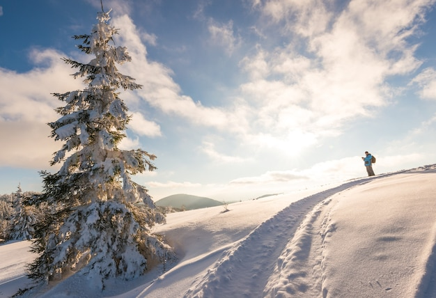 Mannelijke reiziger met een rugzak staat bovenop een besneeuwde heuvel naast een hoge sparrenboom tegen een blauwe lucht en witte wolken op een zonnige ijzige winterdag Premium Foto