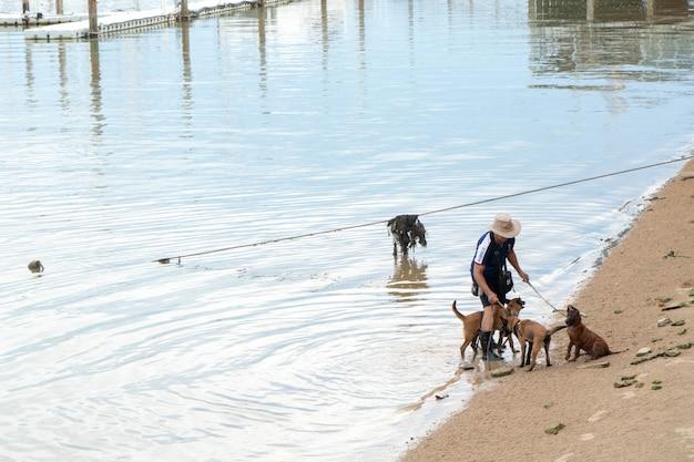 Mannen lopen honden om in het water te spelen. Premium Foto